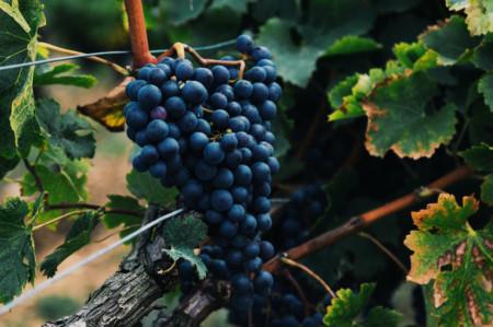 Ramillete de uvas en un viñedo