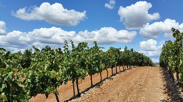 rutas del vino_opt