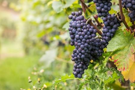 tipos de vinos que existen